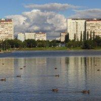 Любимый пруд :: Андрей Лукьянов