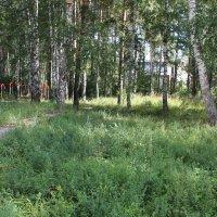 Воскресная прогулка по лесопарку :: Наталья Золотых-Сибирская