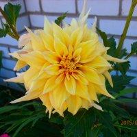 Жёлтый цветок :: Богдан Коростелёв
