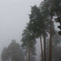 Туман.................. :: Валерия  Полещикова