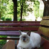 Суровый питерский кот, который гуляет сам по себе... :: Ирина Румянцева