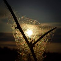 Солнце в ловушке. :: Екатерина Дроздова