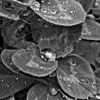 """""""После дождя"""" :: Nadezda Solove"""