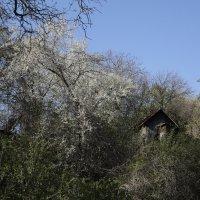 Цветочный хоровод-465. :: Руслан Грицунь
