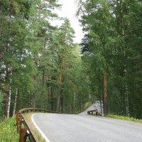 Шоссейная дорога по гряде  Пункахарью :: Елена Павлова (Смолова)