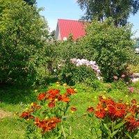 Хорошо, всеж-таки, иметь домик в деревне!:) :: Жанна Викторовна