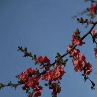 Цветочный хоровод-470. :: Руслан Грицунь