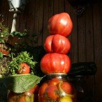 Вот такие они-сызранские помидоры :: nika555nika Ирина