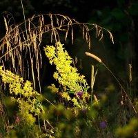 Натюрморт цветочно-травяной. :: Владимир Гилясев