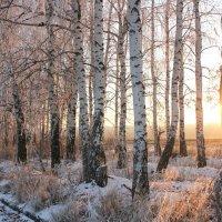 первый снег... :: Елена Лабанова