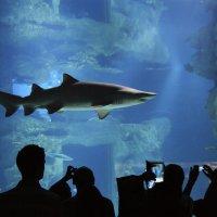 Москвариум. Экспозиция «Открытое море. Главный морской аквариум» :: Alex Sash