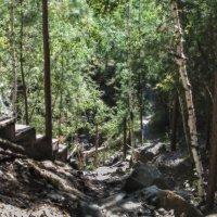 В чаще лесной :: Сергей Адигамов