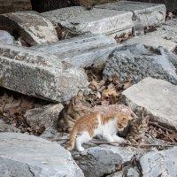Уличные коты :: Алексей Морозов