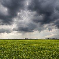 Дождливое лето :: shvlad