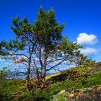 Даже среди камней пробивается жизнь,так хочет быть большим деревцем! :: Людмила Жердева