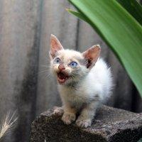 Милый котенок :: Мария .