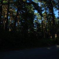 лес в закате дня :: linnud
