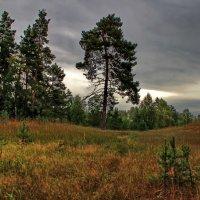 Осенний августа денёк... :: Лесо-Вед (Баранов)
