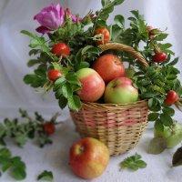 Яблочный Спас :: Светлана Жив-ая