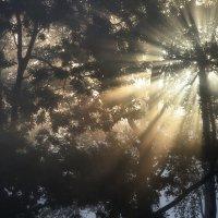 Про утренний свет..... :: Юрий Цыплятников