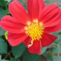 Цветочки в августе! :: Vladikom