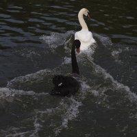 Чёрное и Белое... Вечное противостояние! :: Фёдор Куракин