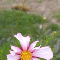 Цветок :: esadesign Егерев