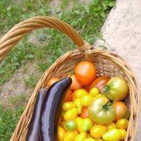 Недельный урожай из теплицы :: esadesign Егерев
