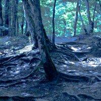 В темно-синем лесу... :: cfysx