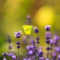 бабочка :: Марат Макс
