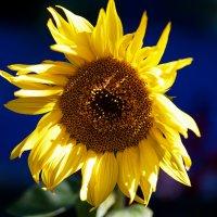 sunny day :: Zinovi Seniak