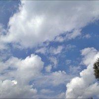 Августовское небо :: Нина Корешкова