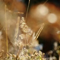 Фонарики,комарики ...всё как в тумане. :: Владимир Гилясев