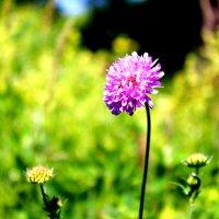 Цветы на грани миров :: Kristin Minasova