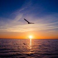 Полет на закате :: Николай Леммер