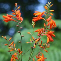 лесной цветок :: valeriy khlopunov