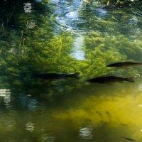 Подводный мир :: Андрей Зайцев