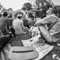 Чутьё собак опережает время! :: Ирина Данилова
