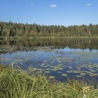 Свято-озеро,Давыдовская пойма :: Сергей Цветков