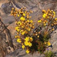 наскальные цветы... :: Ольга Cоломатина