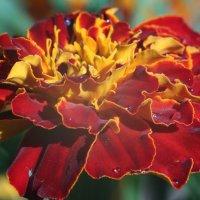 цветы :: Евгений Воронков