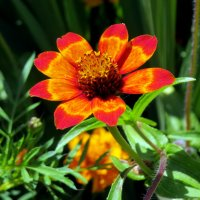 Цветок :: Павел Галактионов