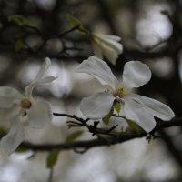 Цветочный хоровод-487. :: Руслан Грицунь