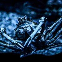 существо океанариума :: Элла Мережская