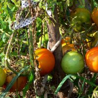 Дача, сад и огород. :: aleks