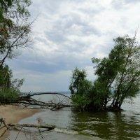 Зеленый островок :: Елена Шемякина