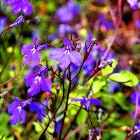 Цветы Сибири :: Александр Попов