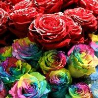 вот такие розы :: Олег Лукьянов