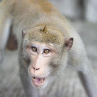 Wild Monkey :: Ann Chase