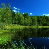 Август. Лесное озеро... :: НаталиКа
